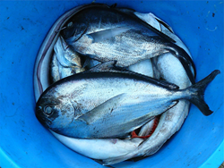Seafood needs to be caught or farmed in environmentally and socially responsible methods.