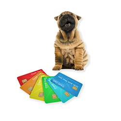 credit card Blue Dog pup