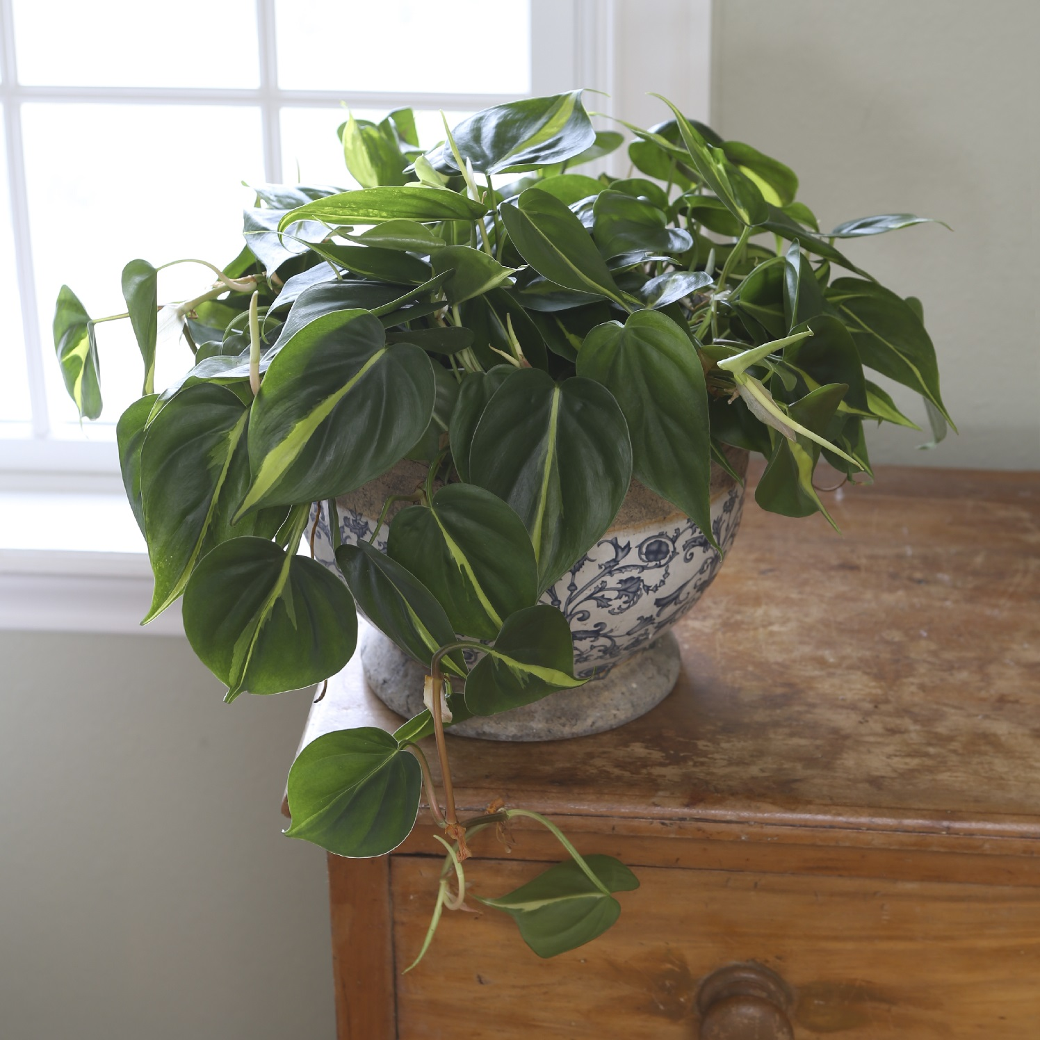 help the environment with houseplants from costa farms. Black Bedroom Furniture Sets. Home Design Ideas