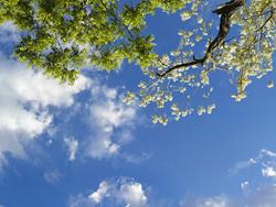 Sky Factory Sky Tree Image