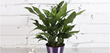 Costa Farms Shares Tips on How Houseplants Make You More Mindful