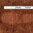 Footwear Impression in Soil