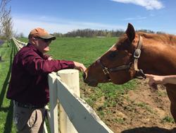 Puritan Premium equine bedding