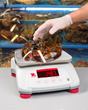 Alliance Scale Food Service Bench Scale Operates Fast in Harsh Environments
