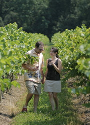 Lake Erie Wine Country is home to 23 wineries and 30,000 acres of vineyards