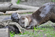 Three Baby Otter Pups Now on Exhibit – In Time for Mother's Day at Oakland Zoo