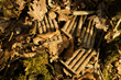 "Photograph by Michael St Maur Sheil.  American 30.06 caliber unfired rifle clips in the Meuse Argonne ""Pocket"" where the so-called ""Lost Battalion"" fought its gallant action."