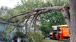 ArborScaper Tree & Landscape offers Complete Tree Services in Rochester NY