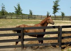 Florida Horse Farm Auction