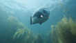Robosea Launches World's First Bionics Unmanned Underwater Drone, BIKI, on Kickstarter