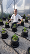 ChilliBobs Dragon's Breath chilli plant producing the hottest chilli in the world
