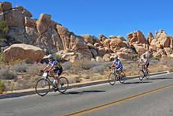Cyclists ride through Joshua Tree National Park on a new biking and hiking tour with Sojourn Bicycling & Active Vacations in 2017.