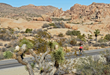 Road cyclists can count on a memorable ride through Joshua Tree National Park during Sojourn's new Joshua Tree and Palm Springs tour that debuts in November 2017.