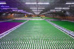 Greenhouse LED Grow Light