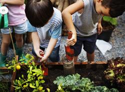 Children Exploring and Working in Outdoor Garden