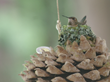 HUMCAM: Mother Hummingbird Builds Nest Under HD Webcam for her 2 Humming-Babies - All Hum All the Time