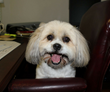 Take Your Dog To Work Day® on June 23 Offers Fun for Participants, Hope for Pets in Need