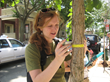 Earthwatch Program Sheds Light on Trees in Cambridge
