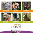 Noto Insurance Continues Community Enrichment with a Fundraising Campaign in Support of EASEL Animal Rescue League