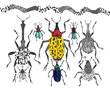 Beetles and More