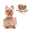 The Russ George Agency Joins Regional No-Kill Animal Rescue Shelter in Charity Drive to Safeguard Neglected Animals