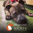 Dieter & Associates Announces Joint Charity Drive with the Dubuque Regional Humane Society to Safeguard Local Animals