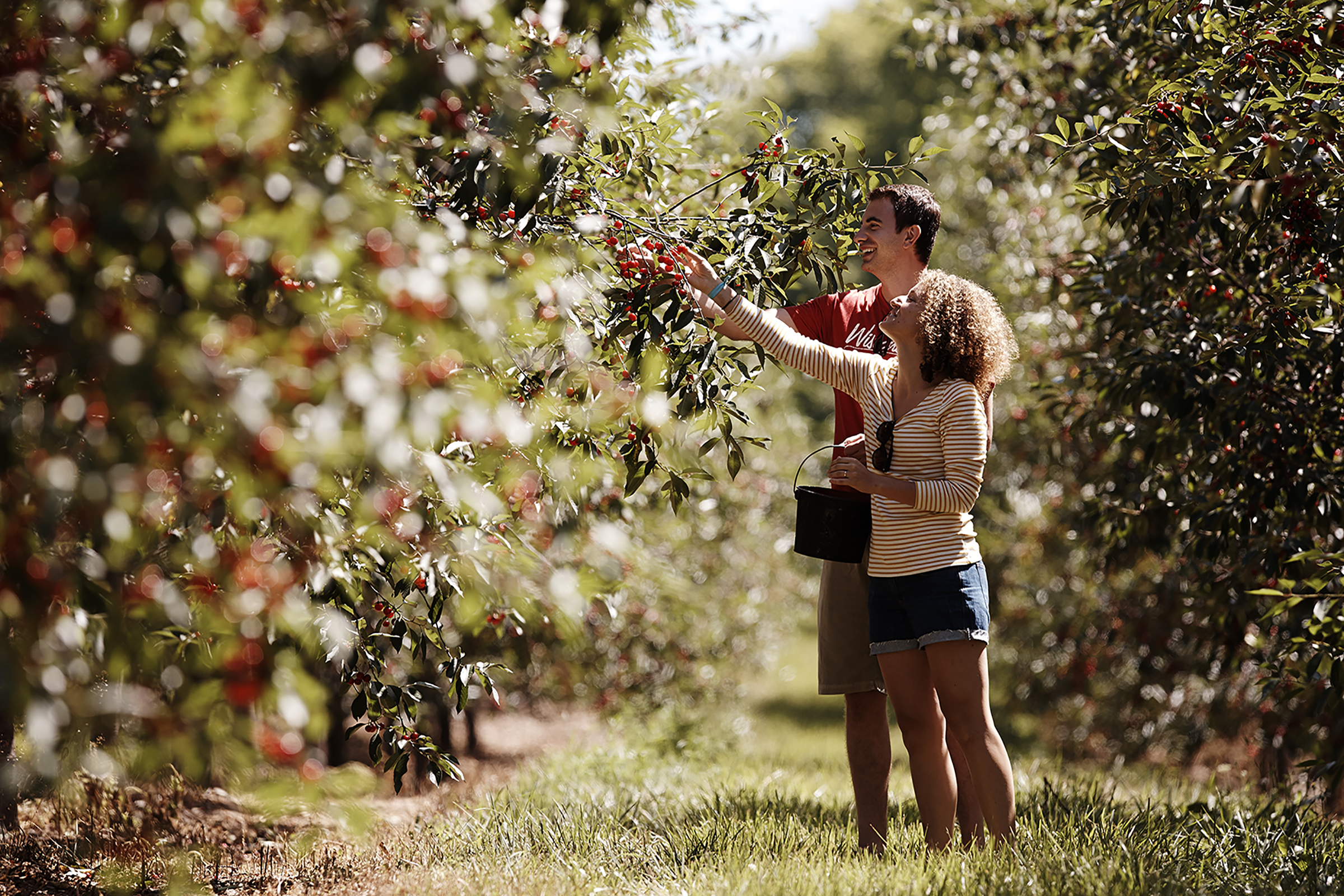 Go Apple or berry picking