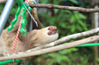 The Great Projects Launch Sloth Conservation Project - You Can Take It Slow In Costa Rica!