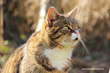 Katzenworld publishes latest guide on How to keep cats cool in the Summer
