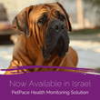 Smart Collar for Dogs, Cats Receives Approval for Sales in Israel