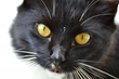 Katzenworld presents latest guide Caring For Your Cat's Eyes