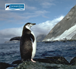 "Penguins as Sentinels of Climate Change - ""Birdman of Antarctica"" Helps Us Understand How Penguins, and Humans, Will Adapt"