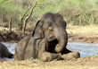 Wildlife SOS Releases Videos of Elephants Coping with India Summer Heat