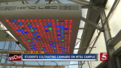 image of kind led grow lights used by university students to cultivate legal cbd in cannabis research