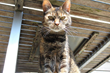 Katzenworld presents latest guide on Caring for Mature Cats
