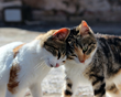 Katzenworld looks at the key steps on how to introduce cats to each other in this latest guide