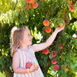 Lyman Orchards Celebrates the Return of Summer's Sweetest Gift: Peaches