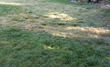Pythium Blight Attacks Salt Lake Lawns