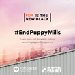 Fur is the New Black: New Video Campaign Spoofs Netflix Series to Raise Awareness to the Sad Reality of Puppy Mills
