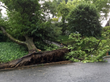 Philadelphia Weather is in Prime Time for Summer Storms and Homeowners Need to Protect Trees from Damage with the Top 3 Actions for Tree Service from Giroud Tree and Lawn
