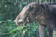 "Wildlife SOS: The ""World's Unluckiest Elephant"" Finds A Little More Justice"