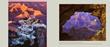 Yavapai Point p 48 - David_Muenchs_Timeless_Moments_Grand_Canyon_NP