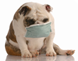 It's Canine Flu Season: What Pet Parents Need to Know to Keep the Family Dog Safe