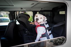 Clickit Terrain was designed to keep dogs and the passengers who ride with them safer in cars.