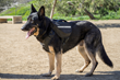 Working dogs and active dogs will benefit from the Clickit Terrain design.