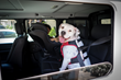 Sleepypod's Clickit Terrain Dog Safety Harness Earns Five Star Crash Rating from Center for Pet Safety