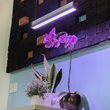 FAUST LIGHTING Launches the First Open Source Tunable Spectrum Grow Light
