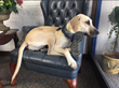 Cumberland Academy of Georgia Welcomes New Therapy Dog