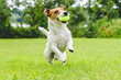 Canine Journal Ranks Healthy Paws Pet Insurance #1