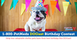 1-800-PetMeds Cares™ 2017 DOGust Birthday Contest Celebrates Shelter Dog Birthday with Grants for Adoption Fees